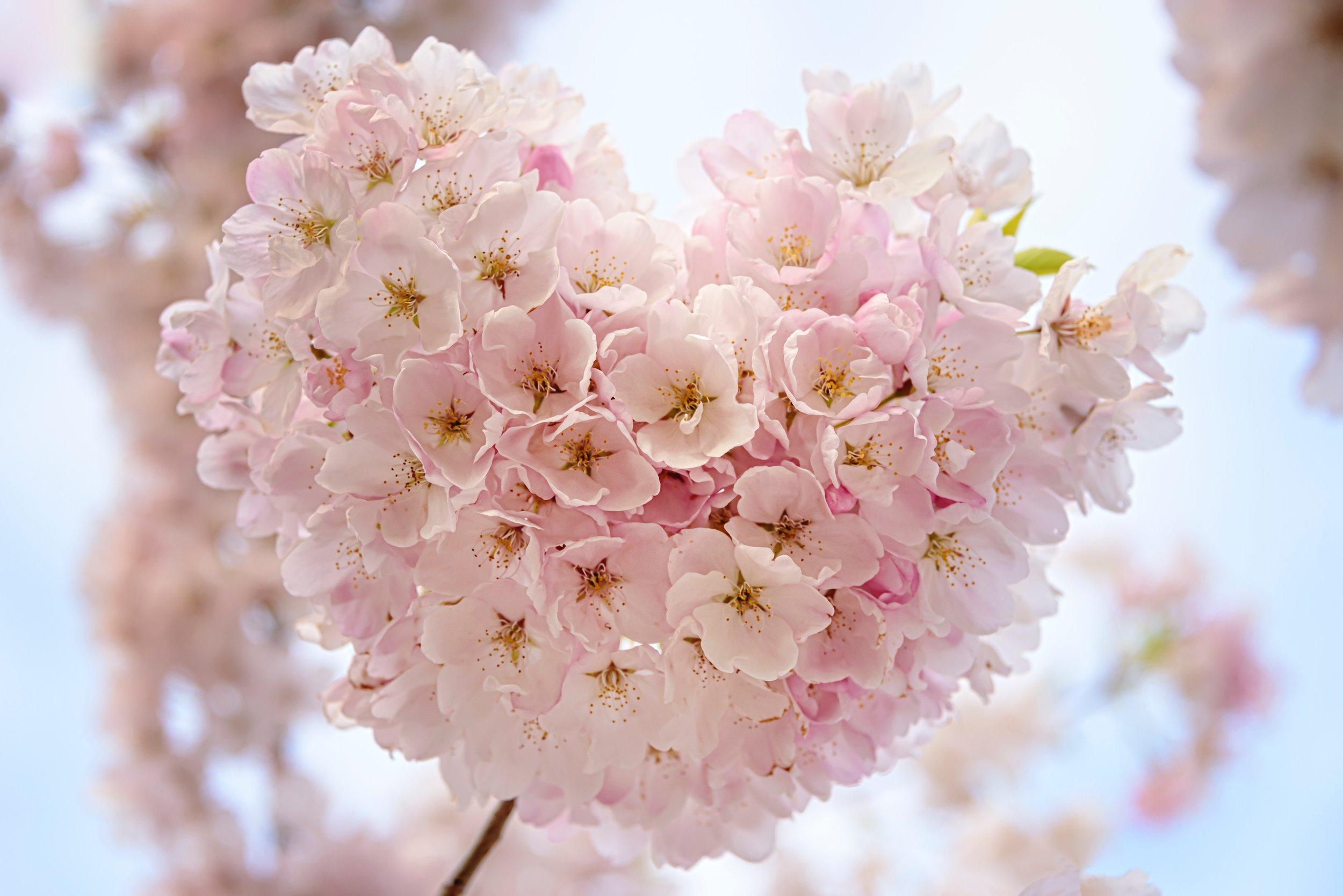 faye-cornish-heart-in-blossom.jpg