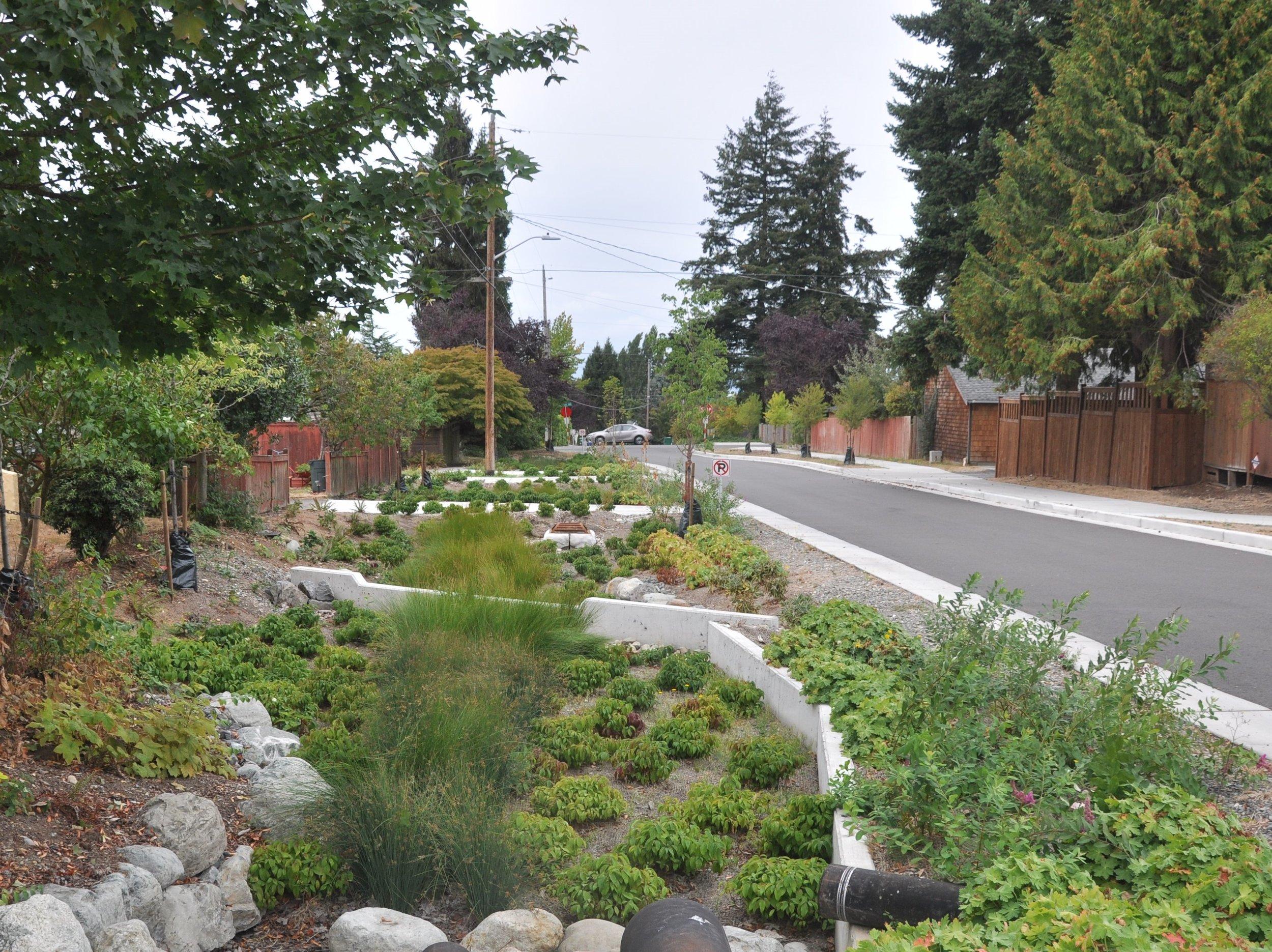 道路の雨受け植栽帯の例