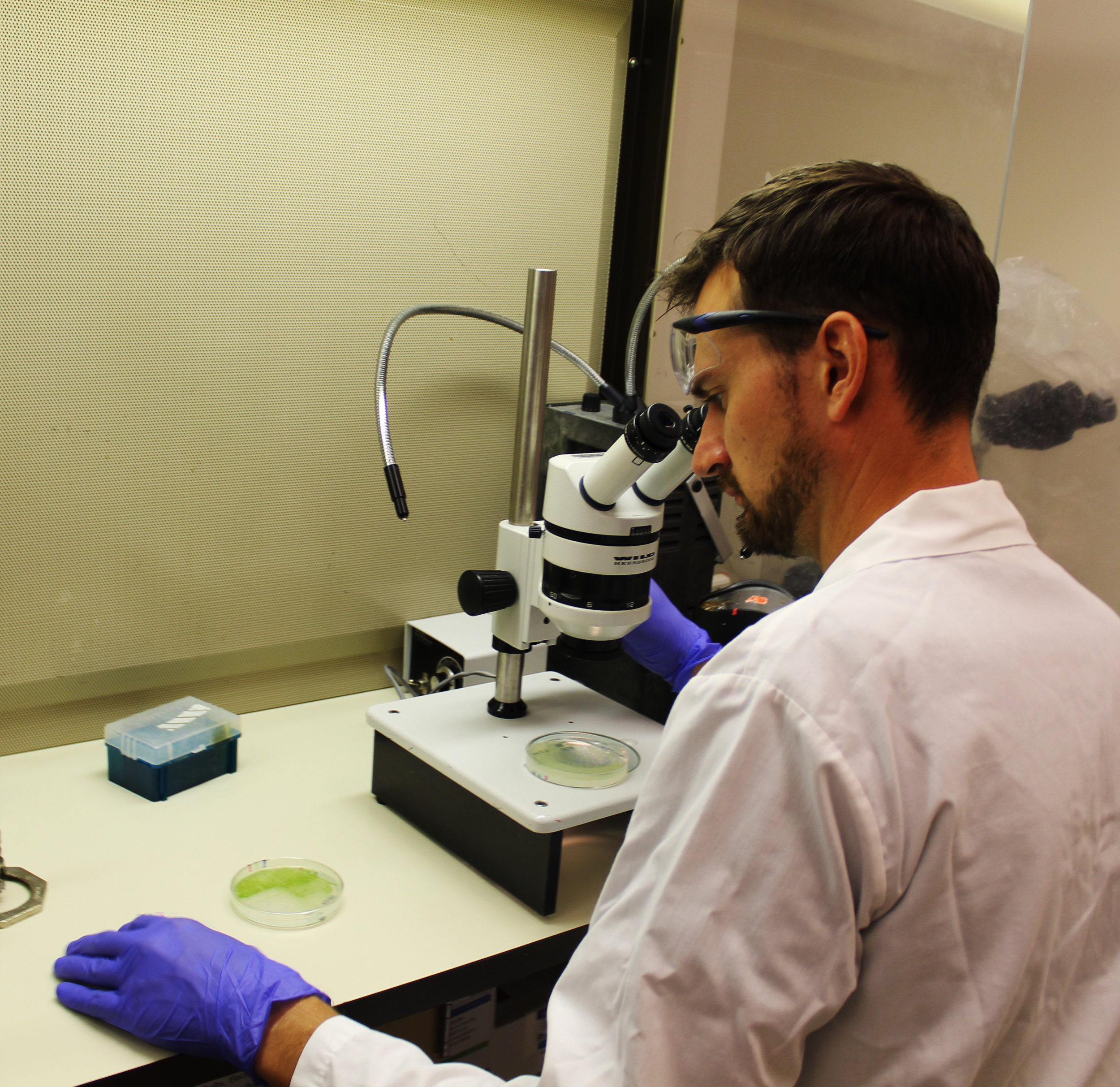 Dr. Bishé looking very seriously at some agar plates