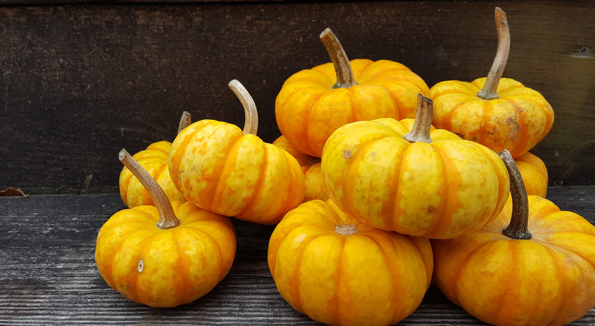 I'm not a fan of pumpkins, but these little fellas are so full of color.