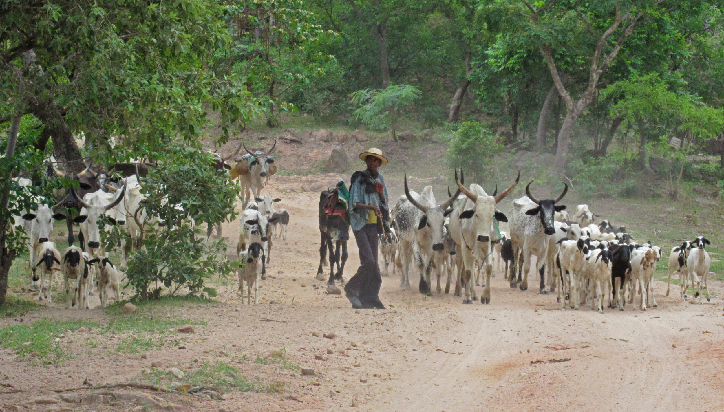 Meeting a Fulani herdsman on the road. Taraba State, Nigeria.