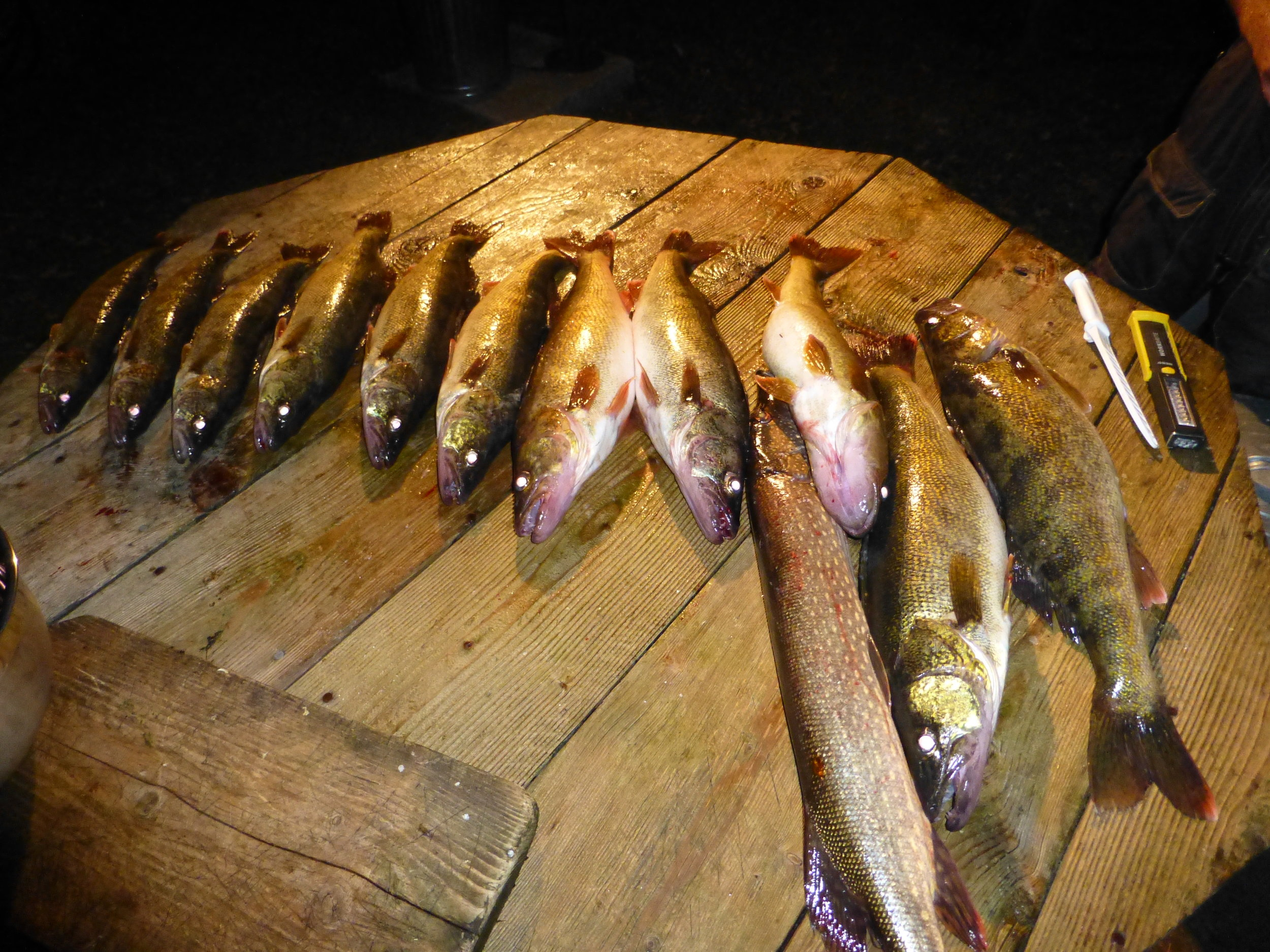 Little Bay De Noc Walleye and Northern Pike