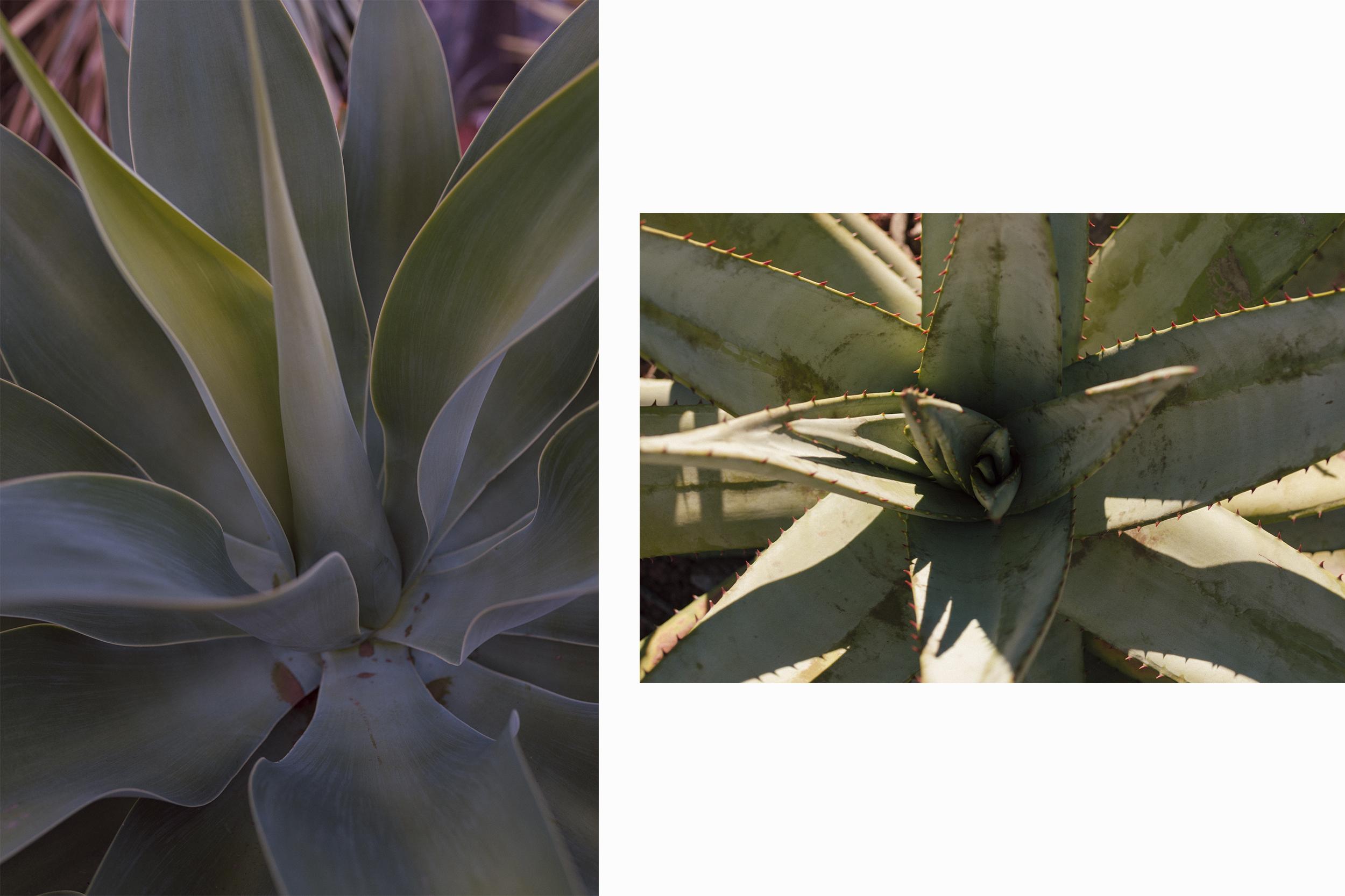 botanical garden shot by karin karas photography sydney