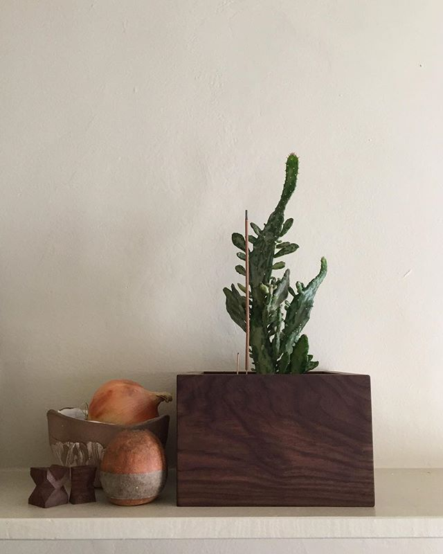 Walnut box for my cactus friend