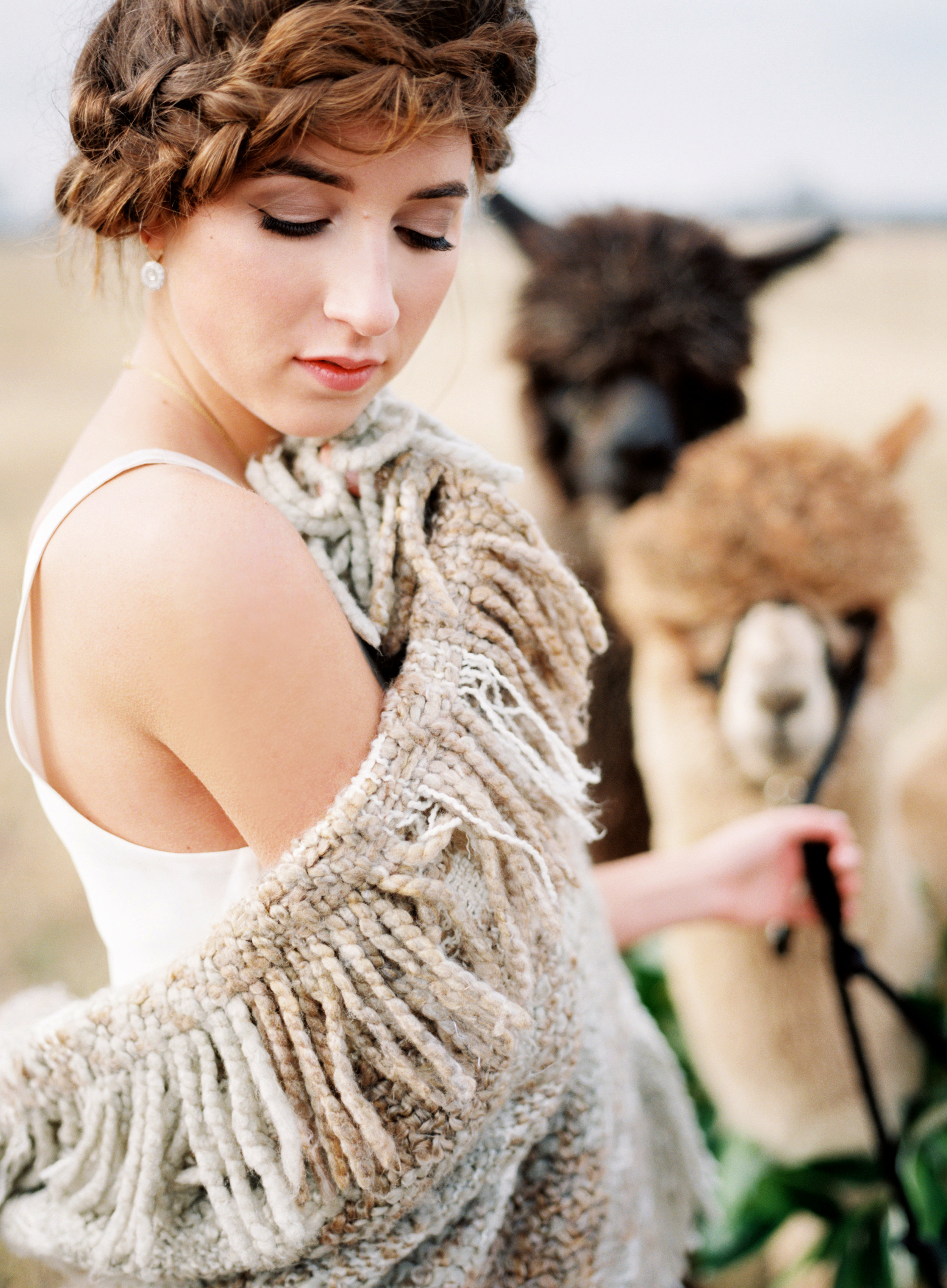 AlpacaNicoleBerrettPhotography0081.JPG