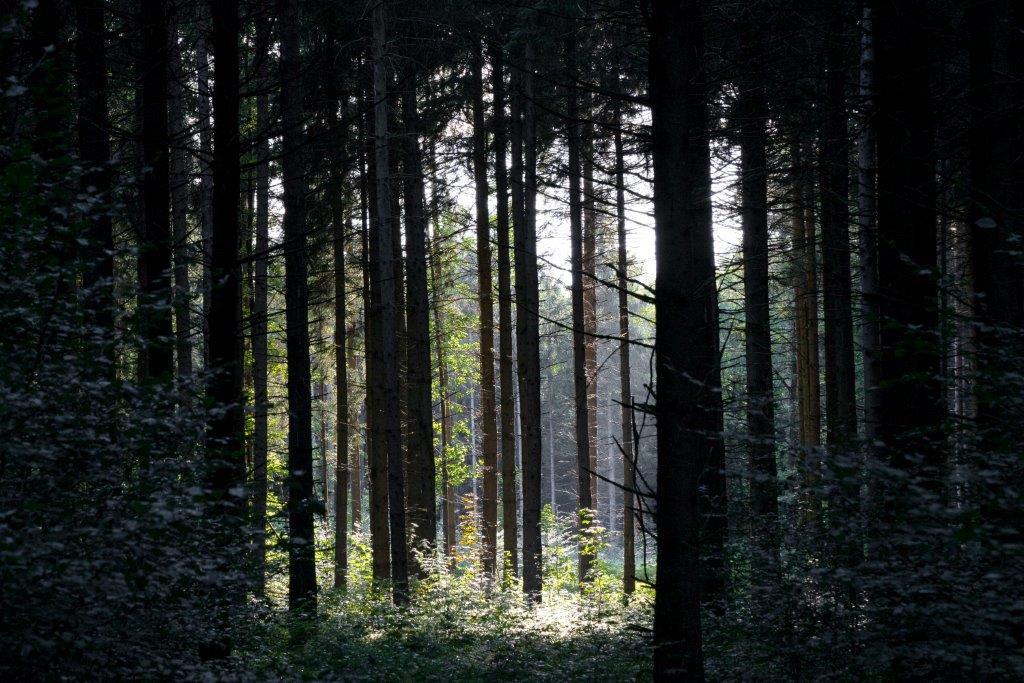 Der Waldlehrpfad hinter der Furthmühle
