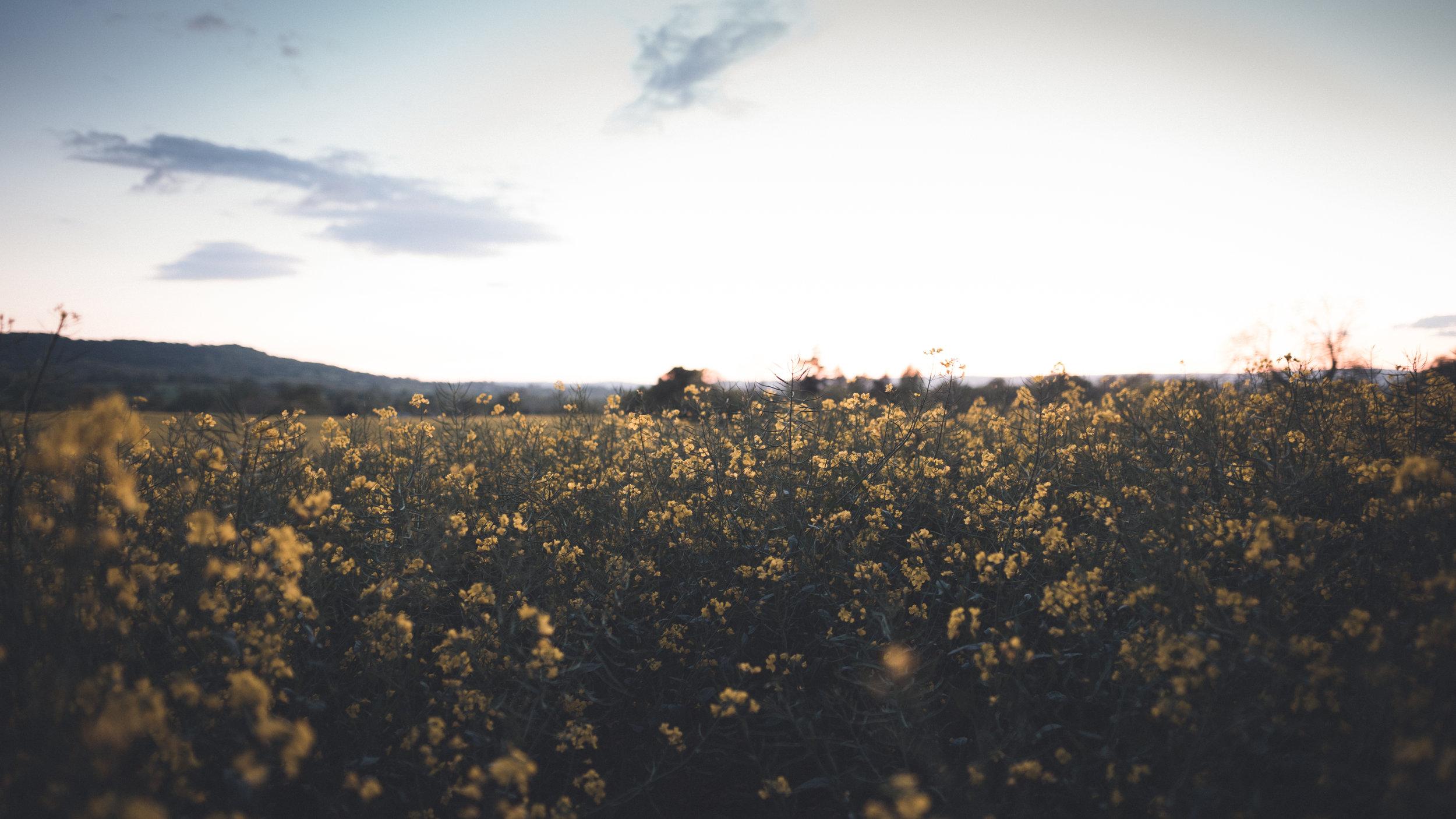 Flowers wide (1 of 1).jpg
