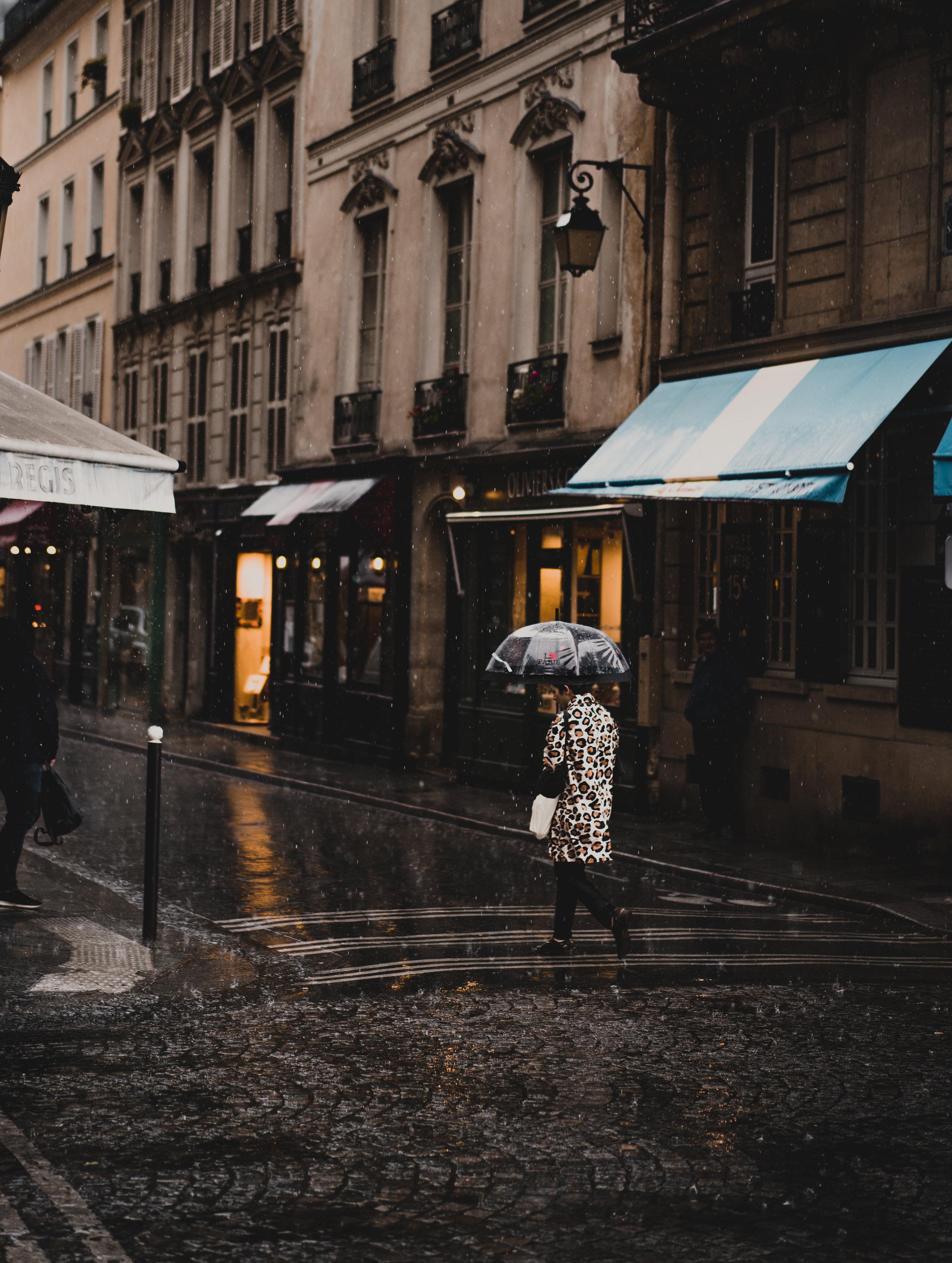 FE Unbrella Zebra (1 of 1).jpg