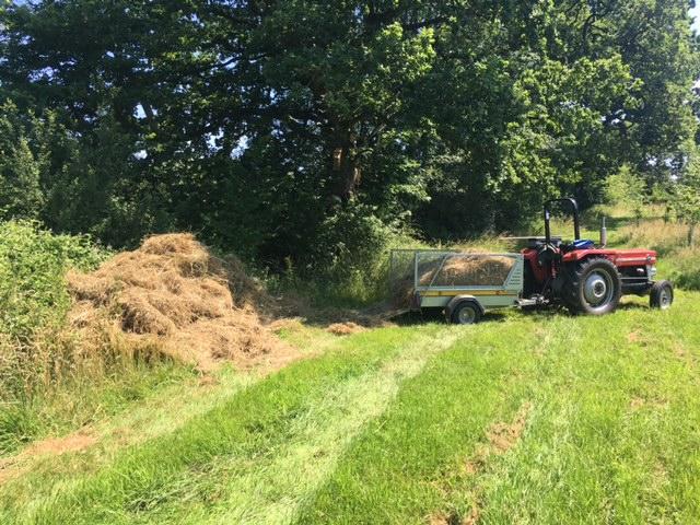 Creating snake friendly grass pile.....