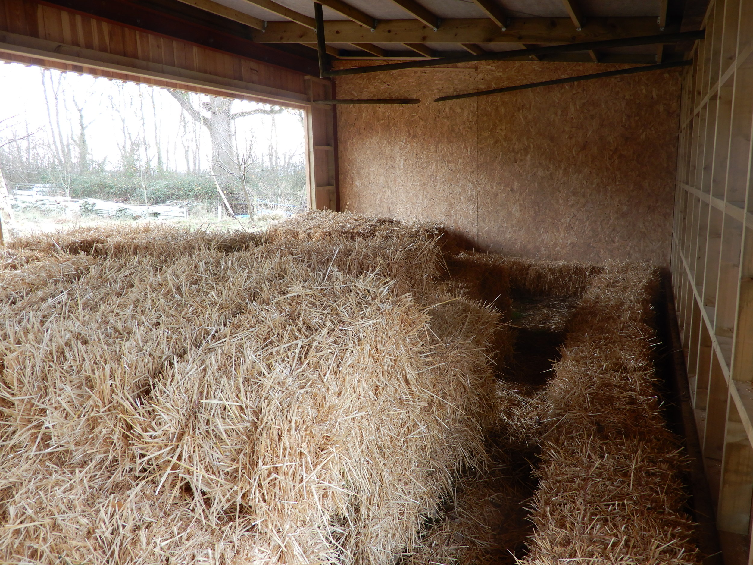 The interior of the barn with straw hay and perches for hunting - grain is spread below the perches to encourage small mammals to inhabit the building.