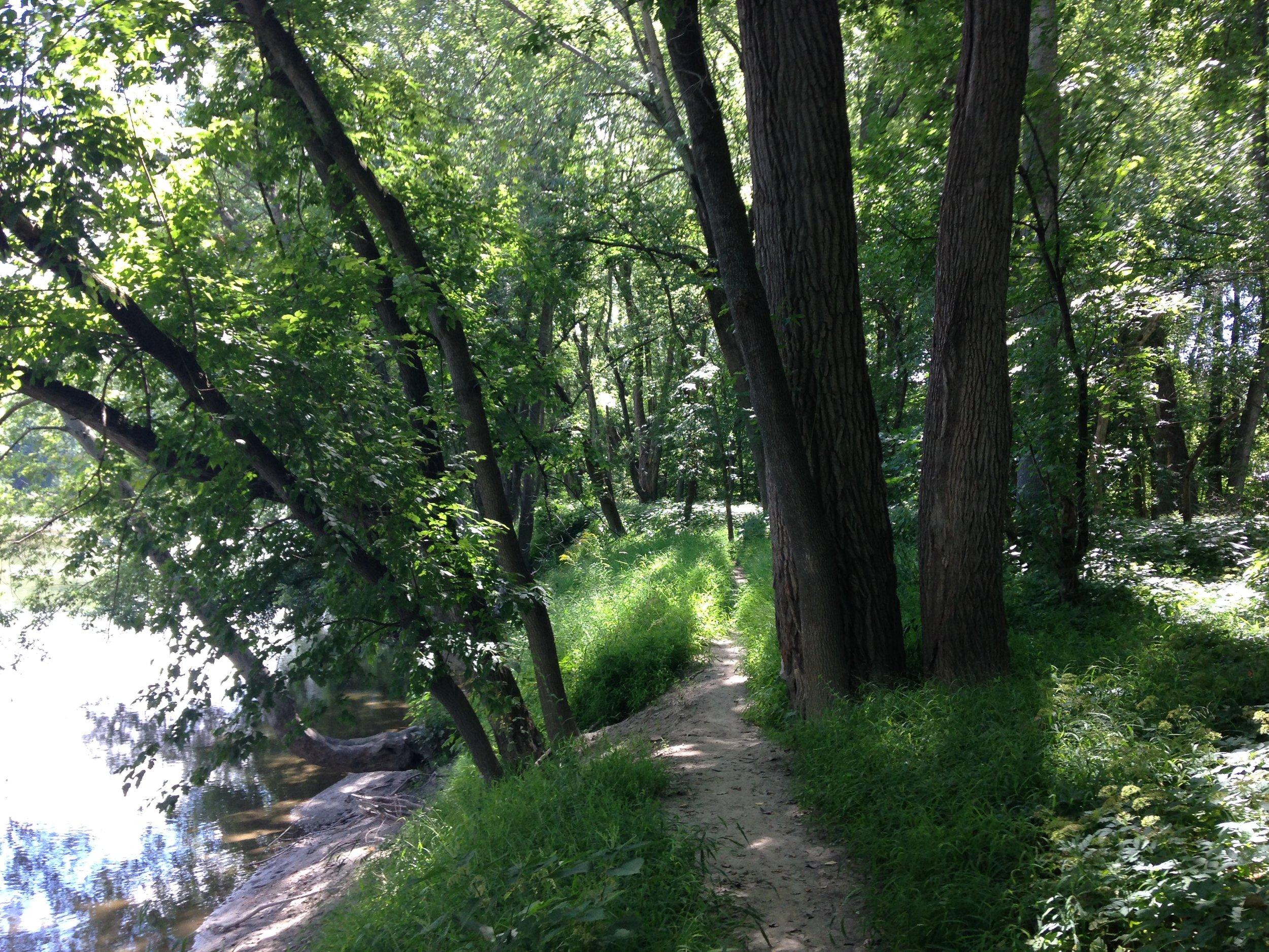 Waterway-Sidewalks-Native-Trees-and-Shrubs-1-11wq1gb.jpg