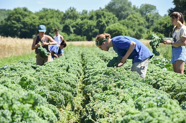 Volunteer opportunity tomorrow (Friday 7/19)! Help us glean at Jericho Settlers Farm from 10:00-12:00!  The Gleaning & Food Access Program gleans and rescues fresh vegetables from Intervale farms and farms in Chittenden County. Our Fair Share Program then distributes this food, every week from July - October, at no cost, to 200 households and 20 social service agencies. We provide community members and organizations access to fresh, local food from farms they know. The Fair Share Program also provides nutrition education, cooking skills, and resources for participants to connect them with nourishing food all year long. Please join us to glean seasonal produce from Jericho Settlers Farm fields!  Sign up online here: https://app.spreadwildfire.com/#/opportunity/gleaning-at-jericho-settlers-farm-cs2swa