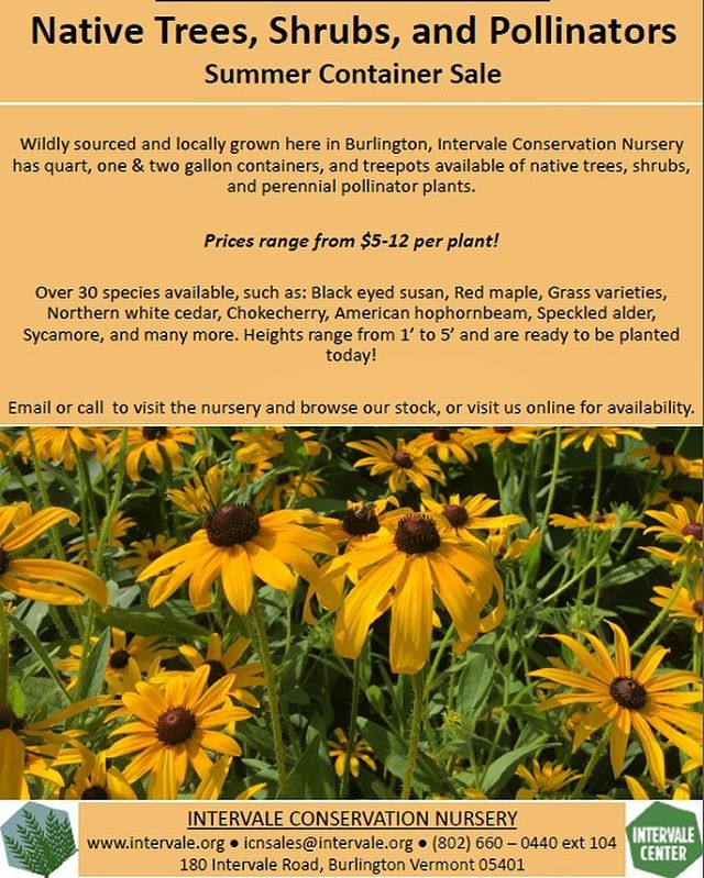 The @intervaleconservationnursery , one of our social enterprises here at the Intervale Center, is having a summer container sale of native trees, shrubs, and pollinators! See availability on our website, or email icnsales@intervale.org for questions and inquiries 🌳