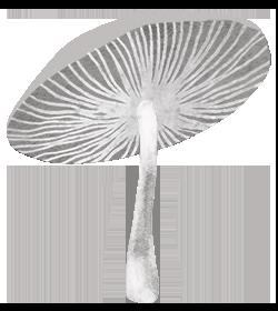 Mushroom_RGB_250px_V1.png