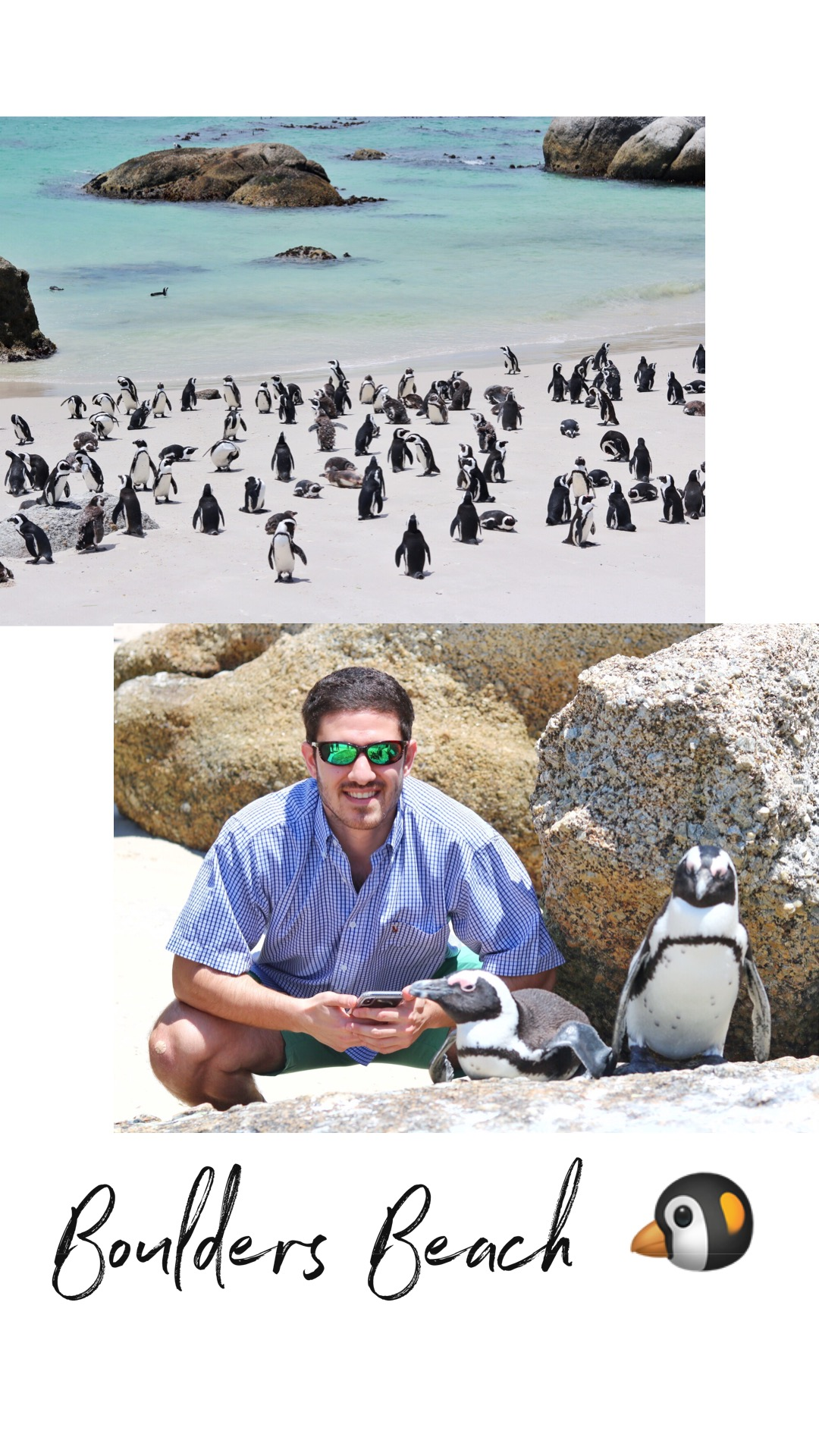 Wanna Swim with the Penguins? - Very important tip that you may not realize when you look up Boulder's Beach on Instagram - there are two different spots to view the penguins! Top photo is taken from the viewing deck where there are hundreds of penguins, but you can't get near them due to a fenced in deck. That's where most of them stay and their burrows/homes are. Bottom photo - a five minute drive from the viewing deck. This is where people can swim with the penguins and you can actually get close to the penguins.
