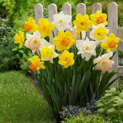 Spring Bulbs (Yes, in Winter!) - Now is the time to get your garden read for Spring. Get your hands dirty and plant your favorite perrienials before the ground freezes over this winter. You'll be happy you did come Spring timeHome Depot