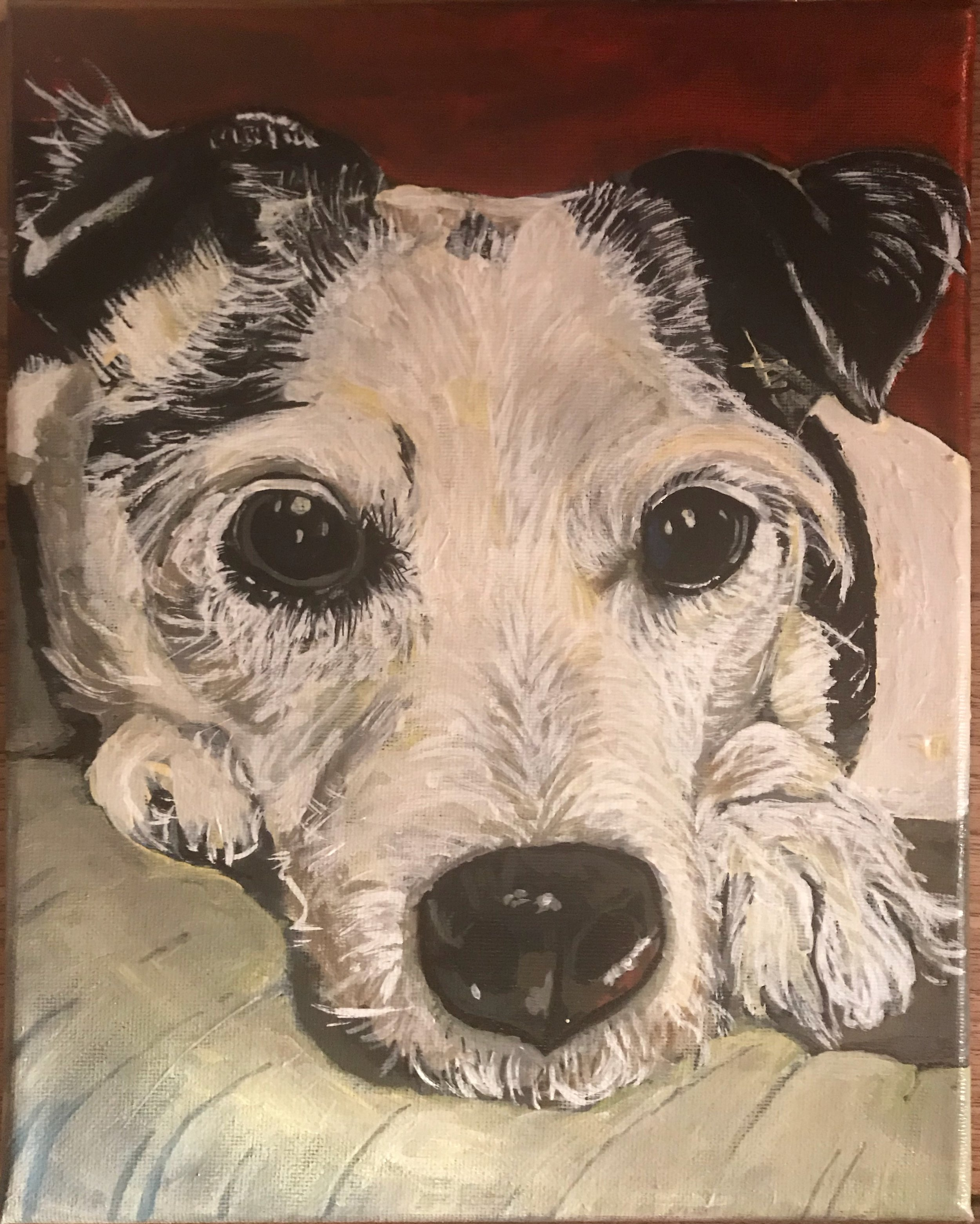 """Racket - Jack Russell - 8""""x10'"""