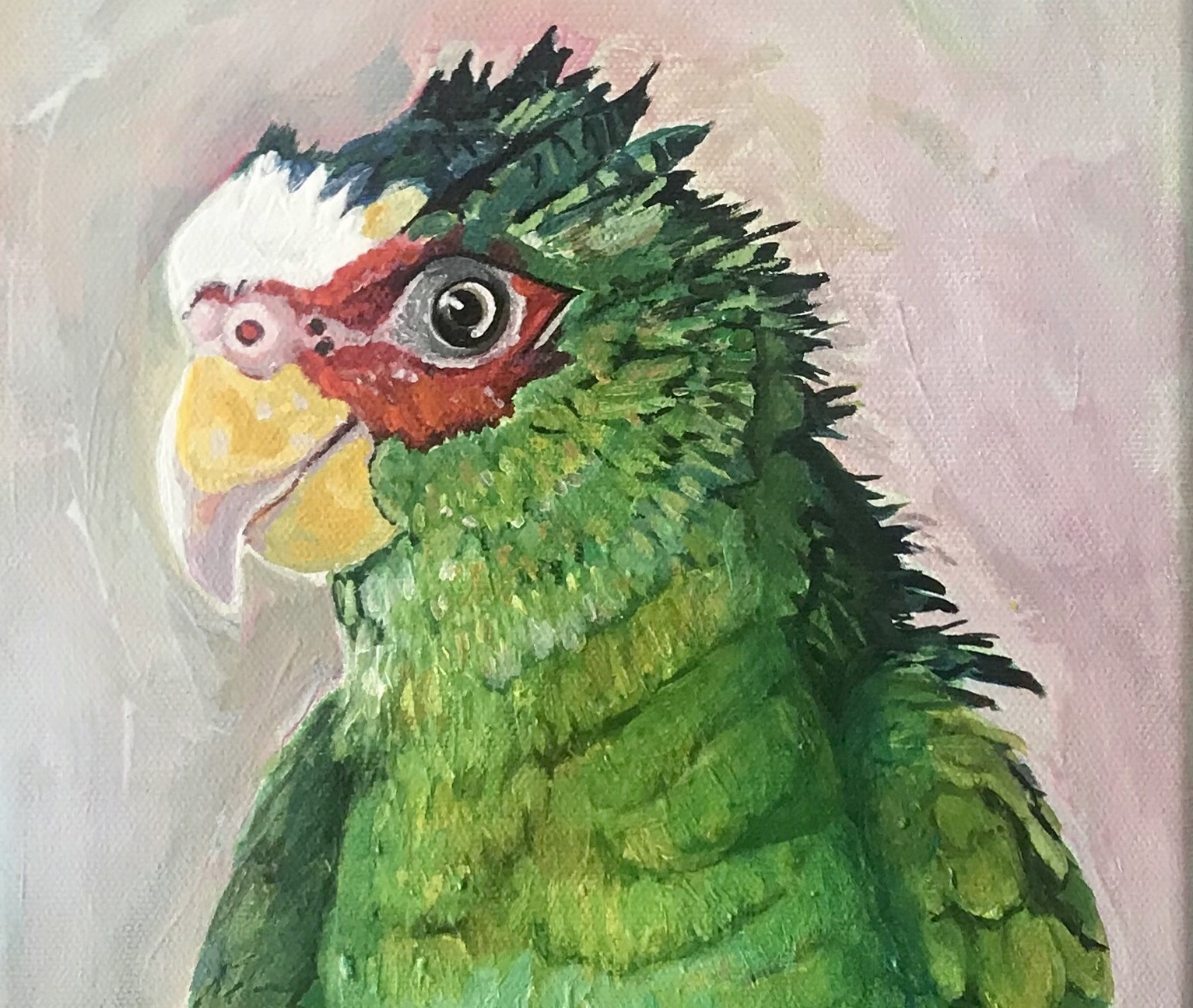 "Augie - Parrot - 10""x20"""