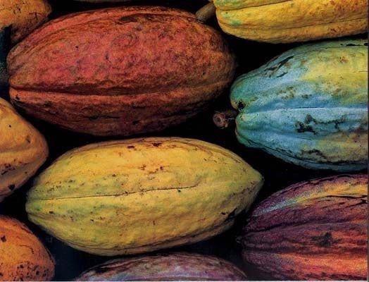 BELLA SOPHIA CHOCOLATES - FINE CHOCOLATES