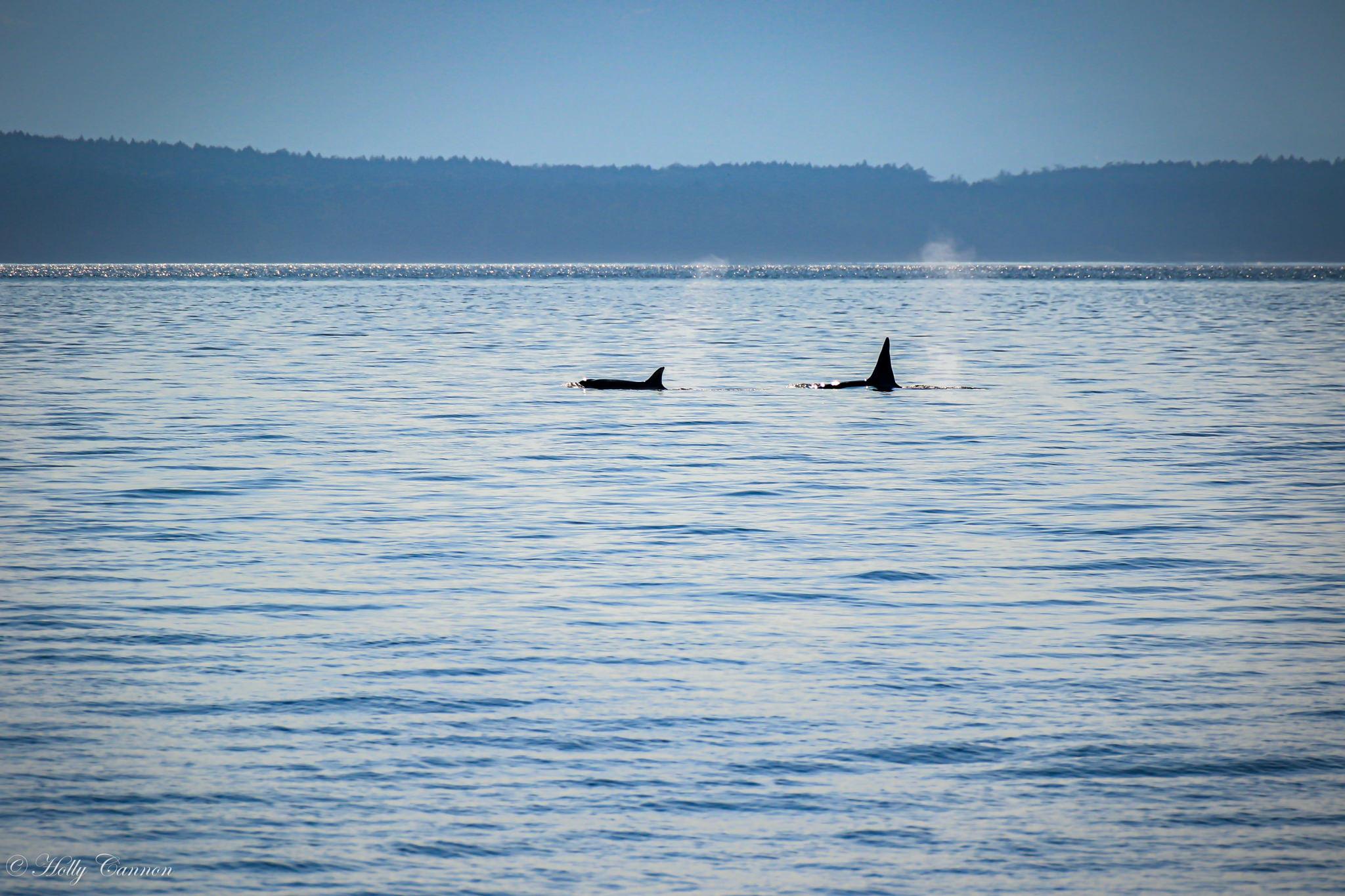 Orca 8_4_19-71.jpg