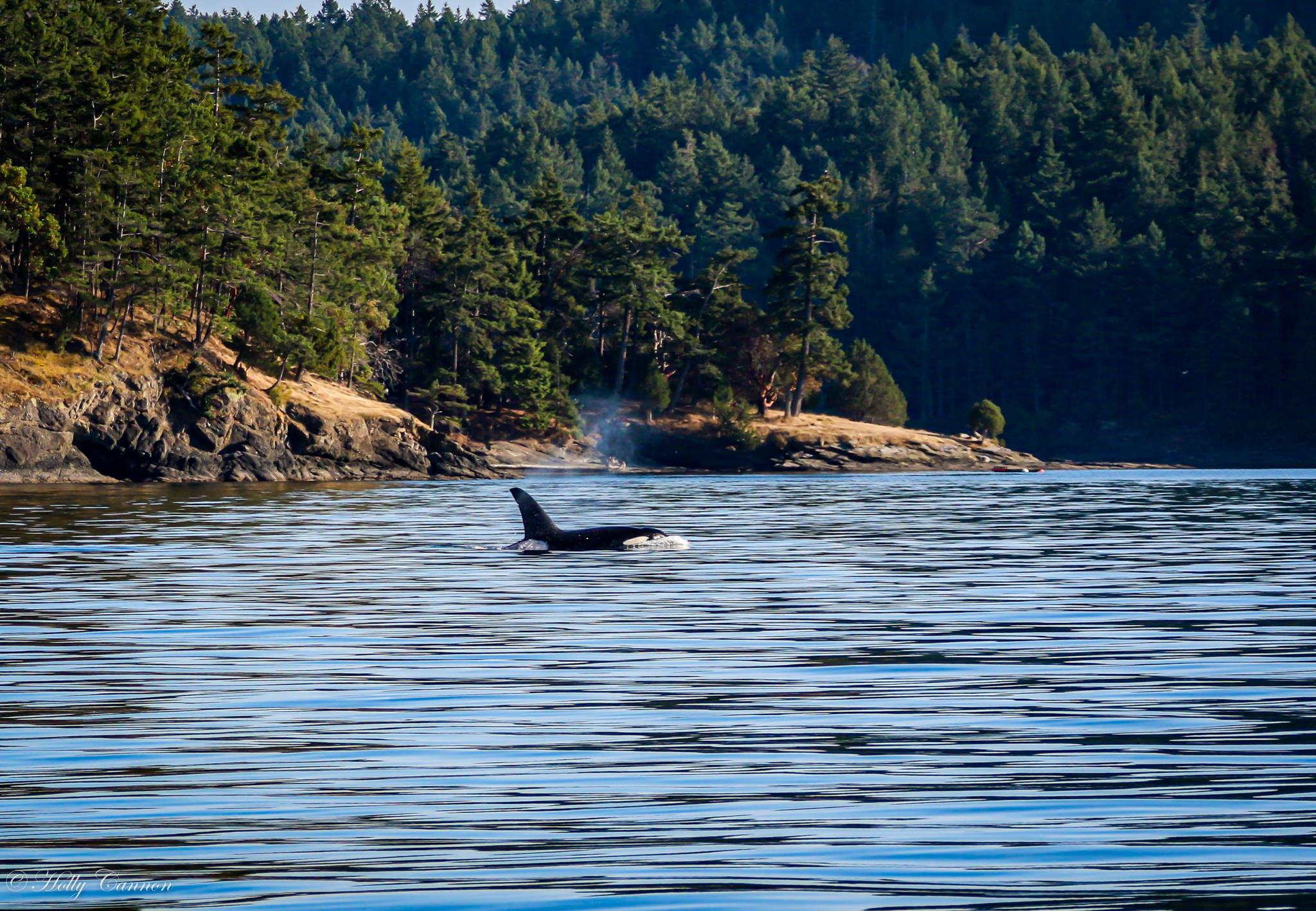 Orca 8_4_19-103.jpg