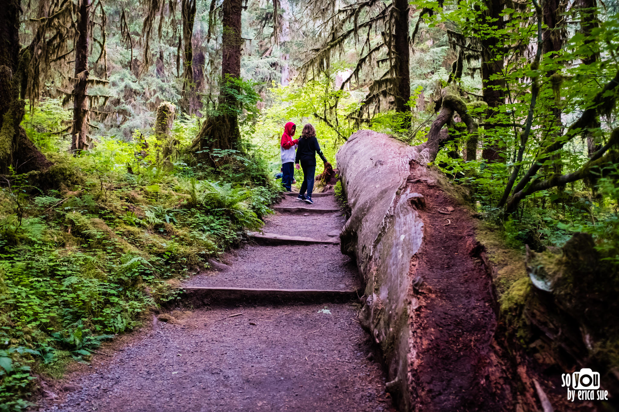 so-you-by-erica-sue-travels-olympic-national-park-road-trip-itinerary-3600.JPG
