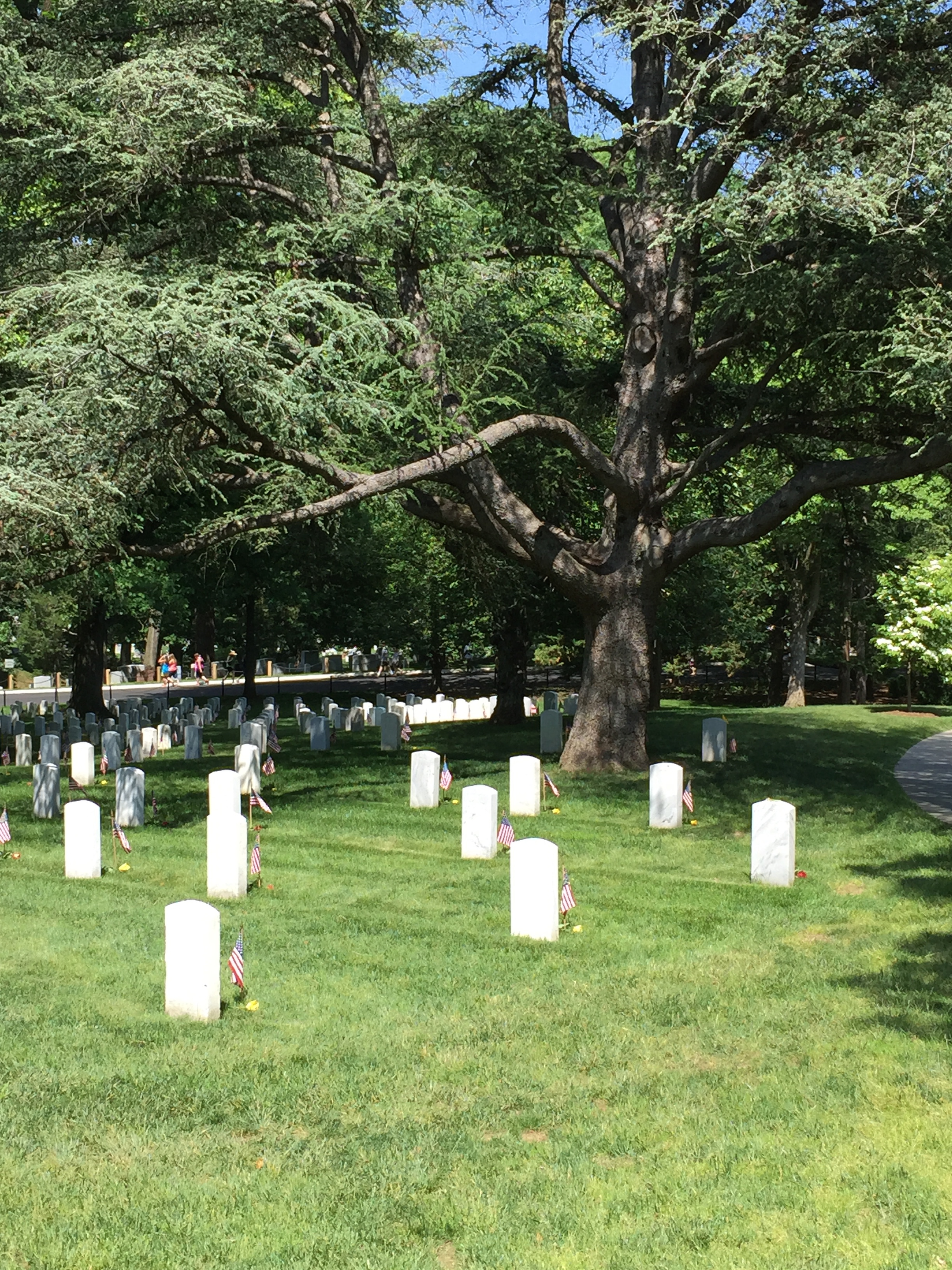 Henry Johnson is buried in this hallowed ground at Arlington National Cemetery.