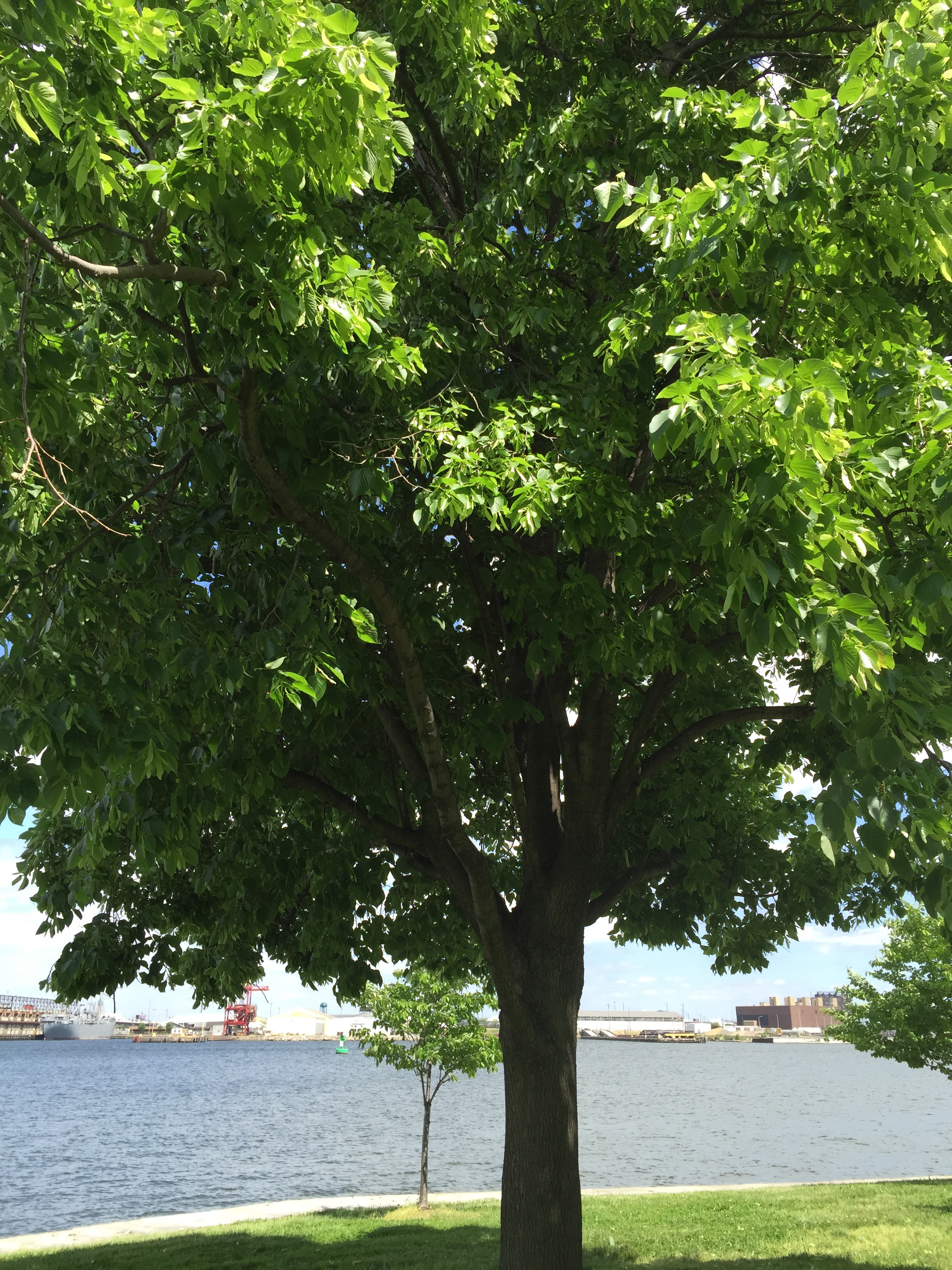 Tree by the Water, Red and Black Ink, LLC.