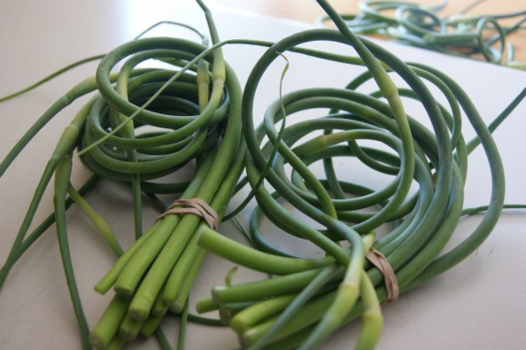 farmersmarket-garlicscapes