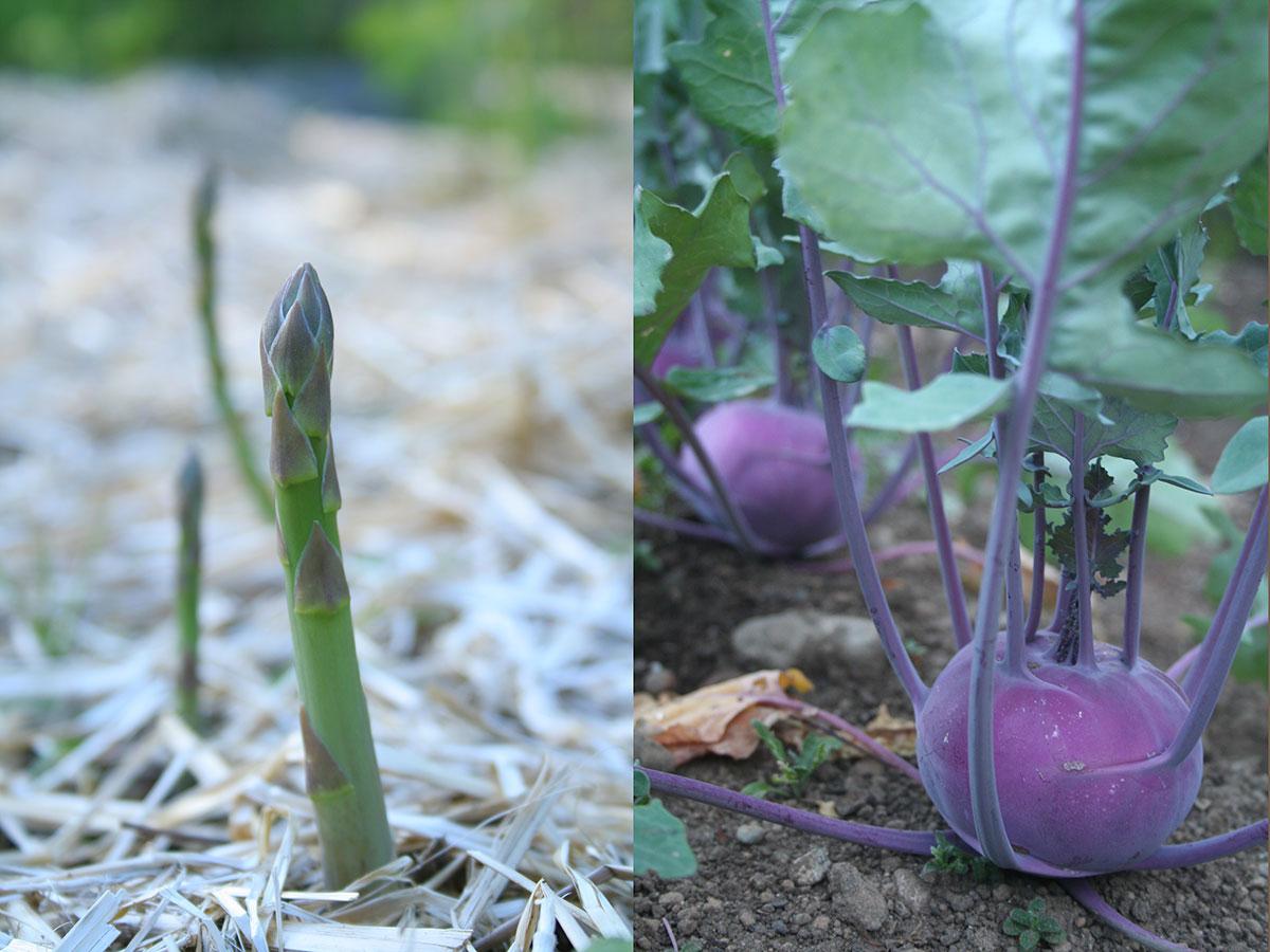 asparagus & kohlrabi