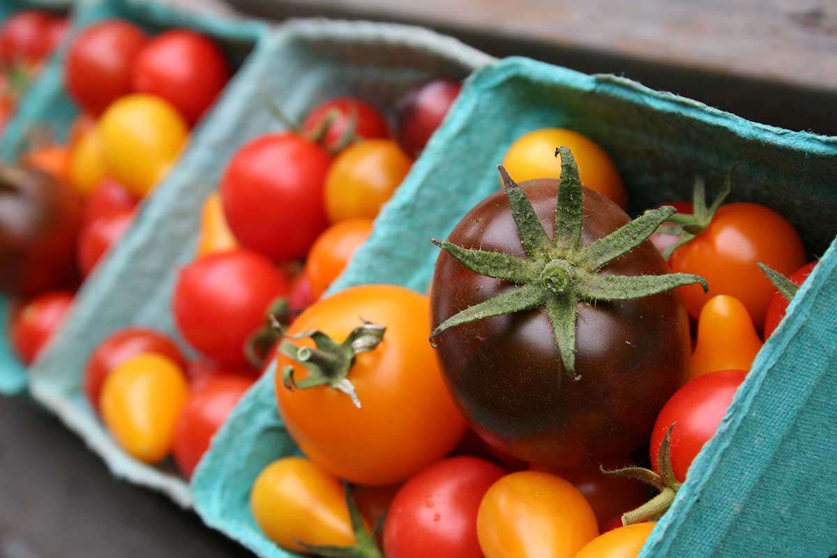 mixed greenhouse heirloom cherry tomatoes