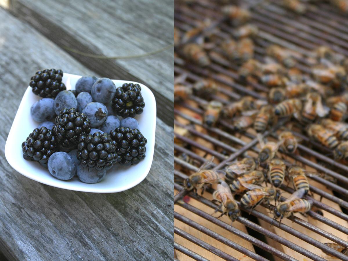 get-fresh-bees-berries.jpg