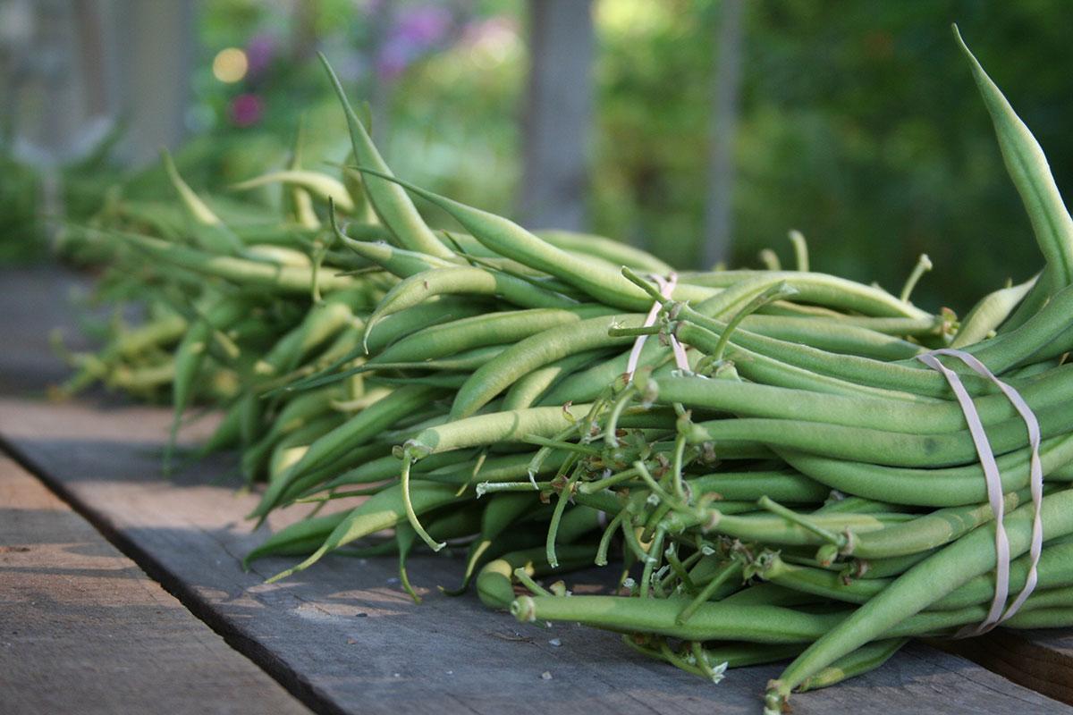 whats-fresh-september-green-beans.jpg