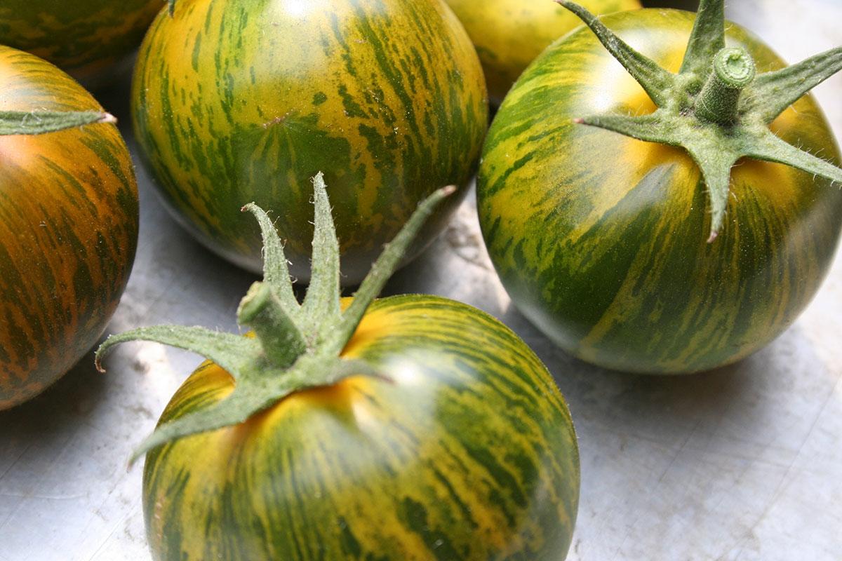 whats-fresh-september-green-zebra-tomatoes.jpg