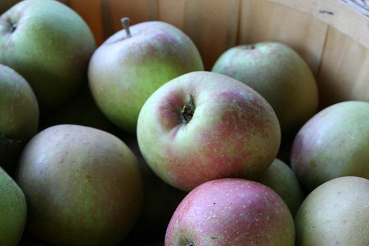 bc-apples.jpg