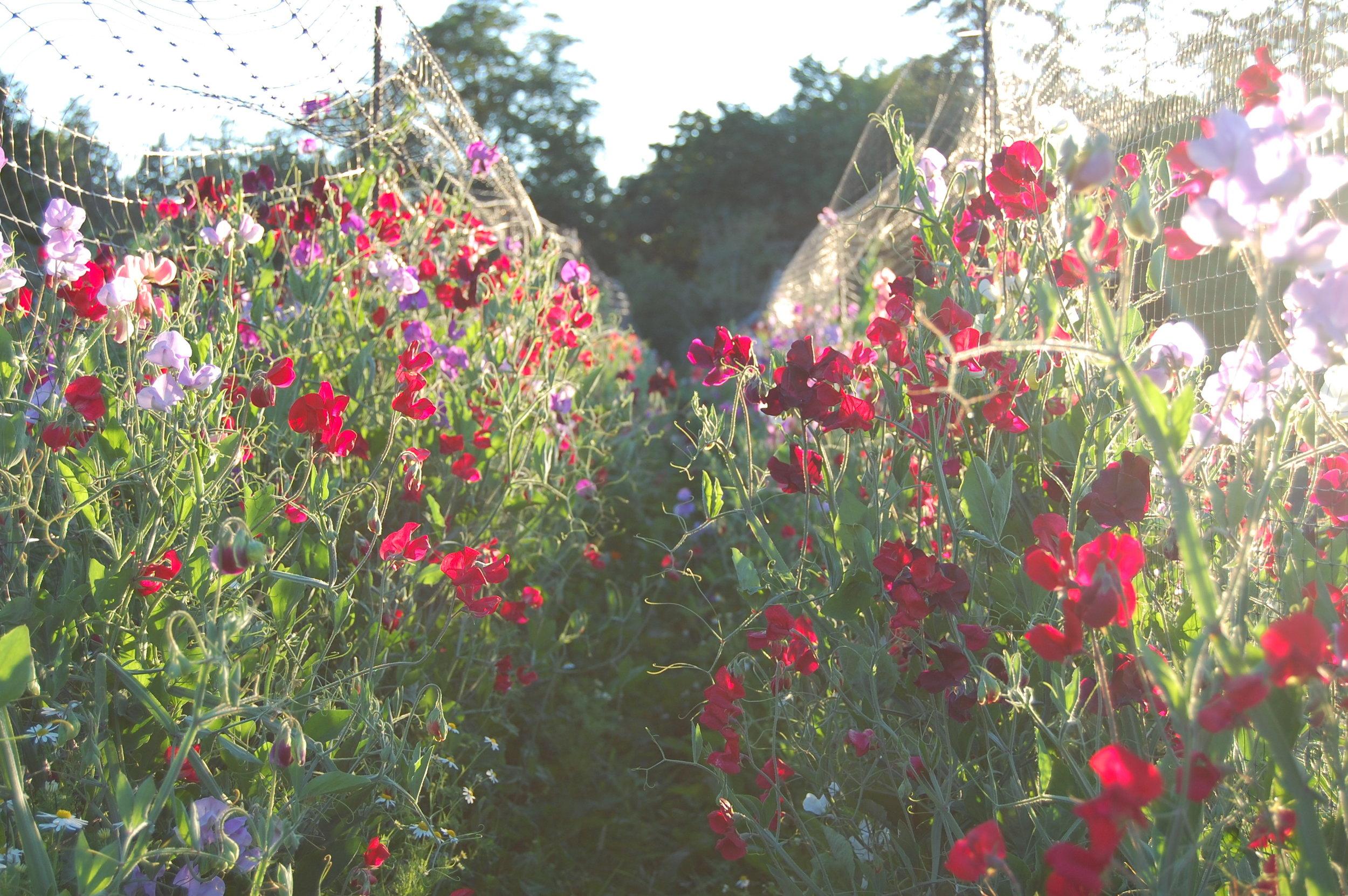 Flowers_Farm.jpg