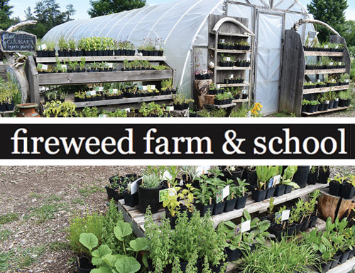 fireweed-farm-school.jpg