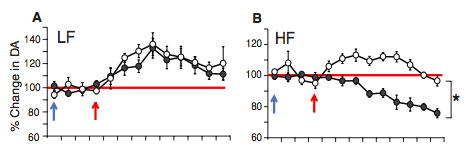 A: low-fat fed mice; B: high-fat fed mice. In high-fat fed mice, administering OEA before fat infusion restores dopamine bump. (From Fig 1)