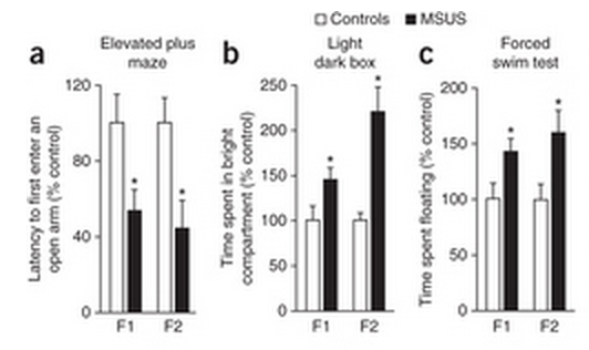 Compared to controls (white bar), MSUS (traumatized, black bar) mice are faster to enter elevated spaces (a) and spend more time in naturally aversive bright spaces (b). They also spend more time floating, rather than struggling in water (c).