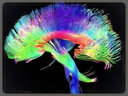 IM impacts the neuronal pathways within the brain.