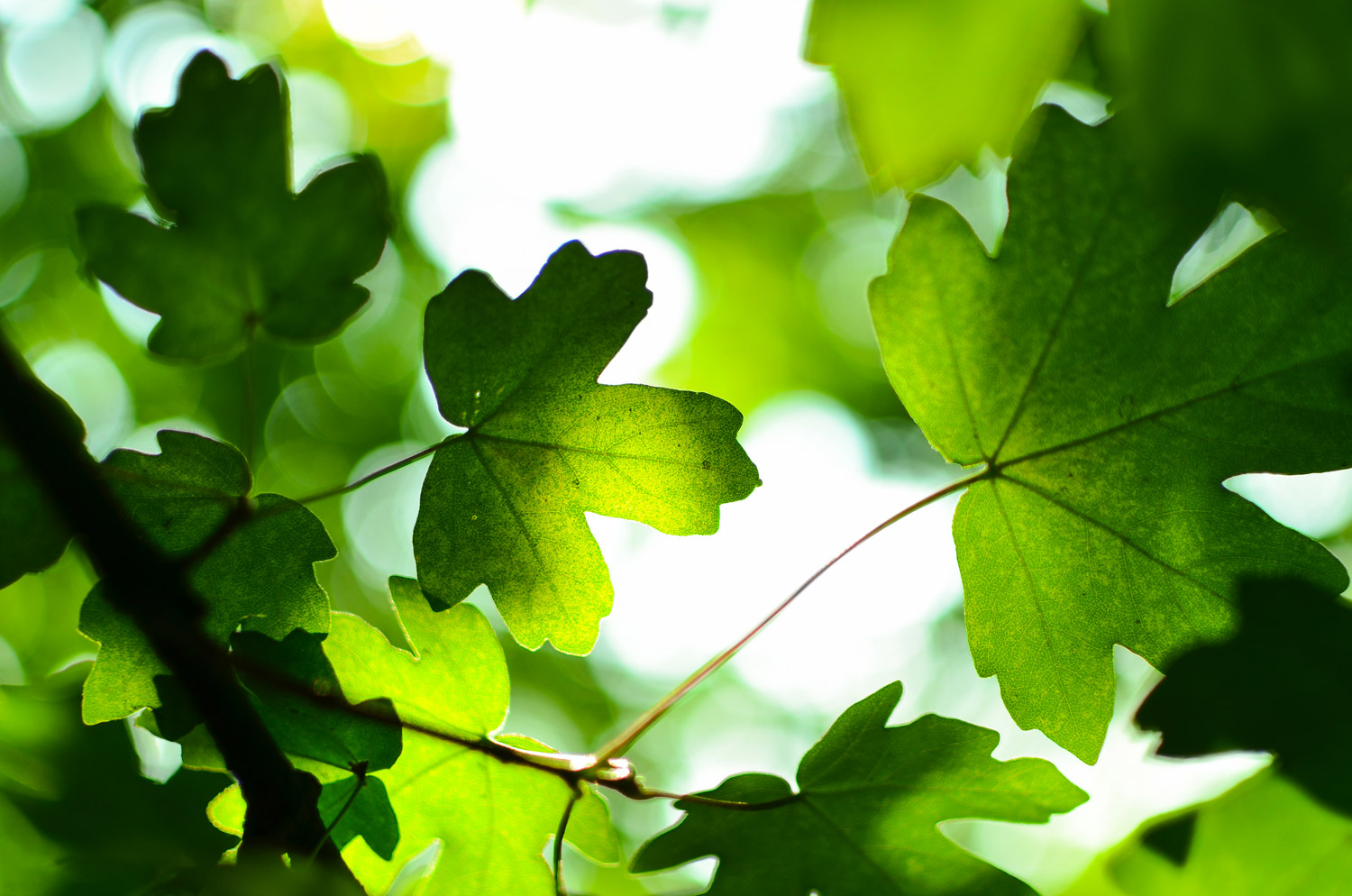 We are committed to sustainability and green values   -