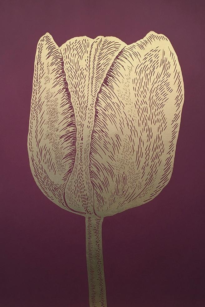 Tulip-bordeaux.jpg