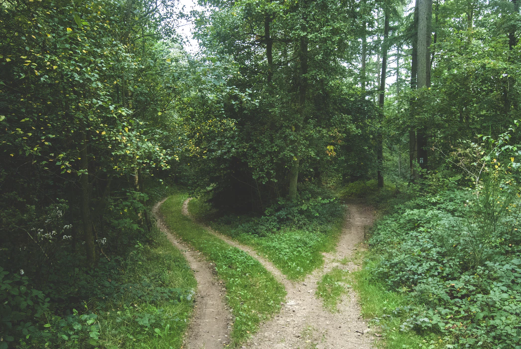 wooded area and path that forks into two separate paths