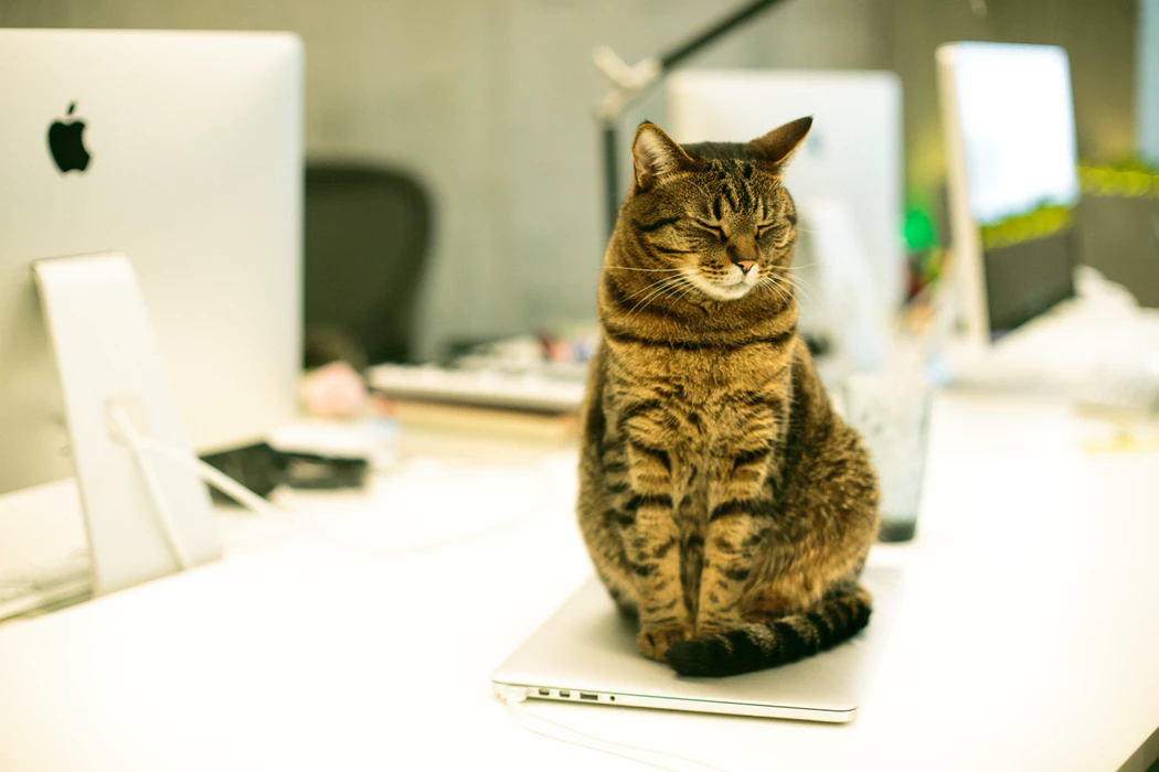 Cat office pet sitting on top of a desk