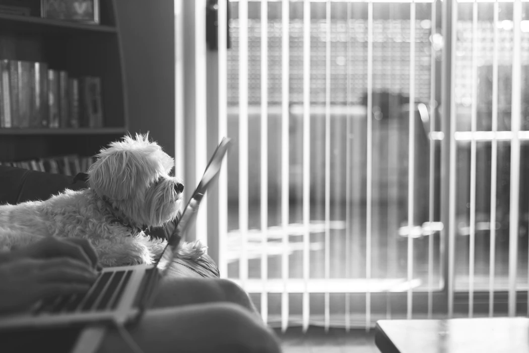 Small dog sitting next to someone working on a laptop