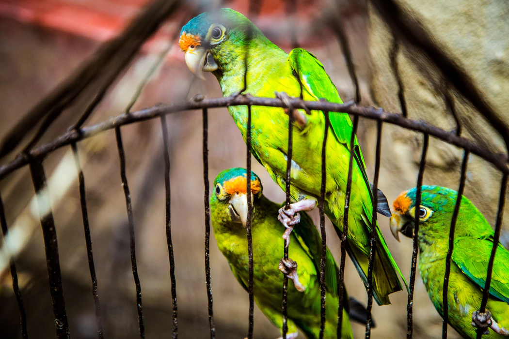 Colorful birds that are office pets