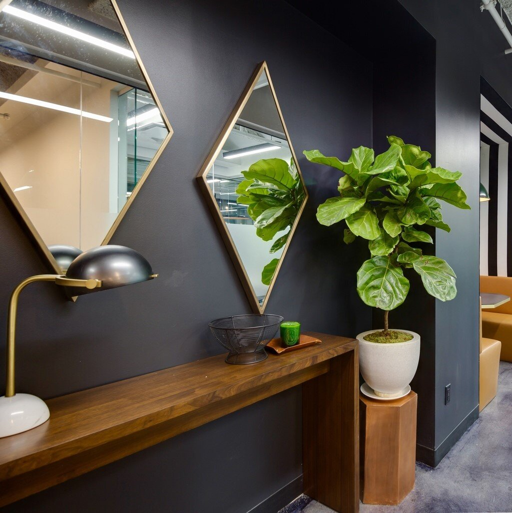 Mirrors on a wall over a slim table next to a plant