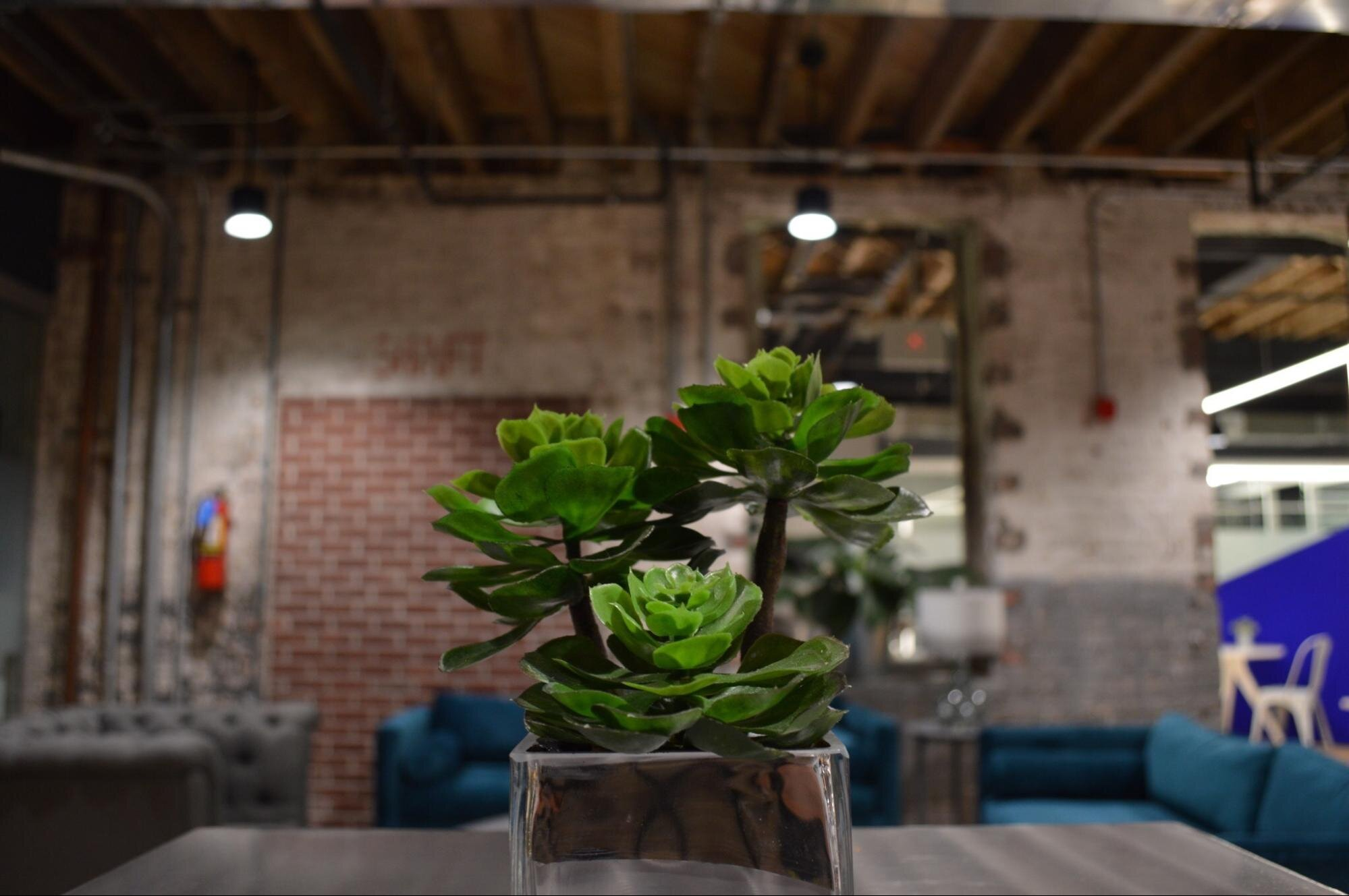 Plant on a table in an industrial-looking workspace