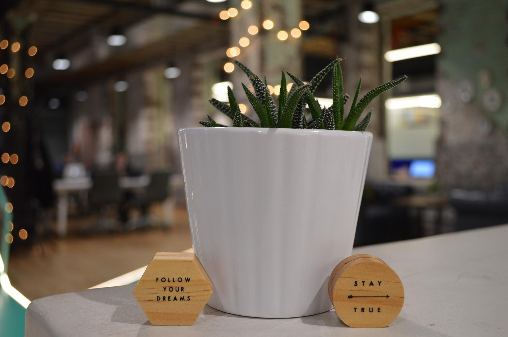 Plant in a white pot in a sustainable office space