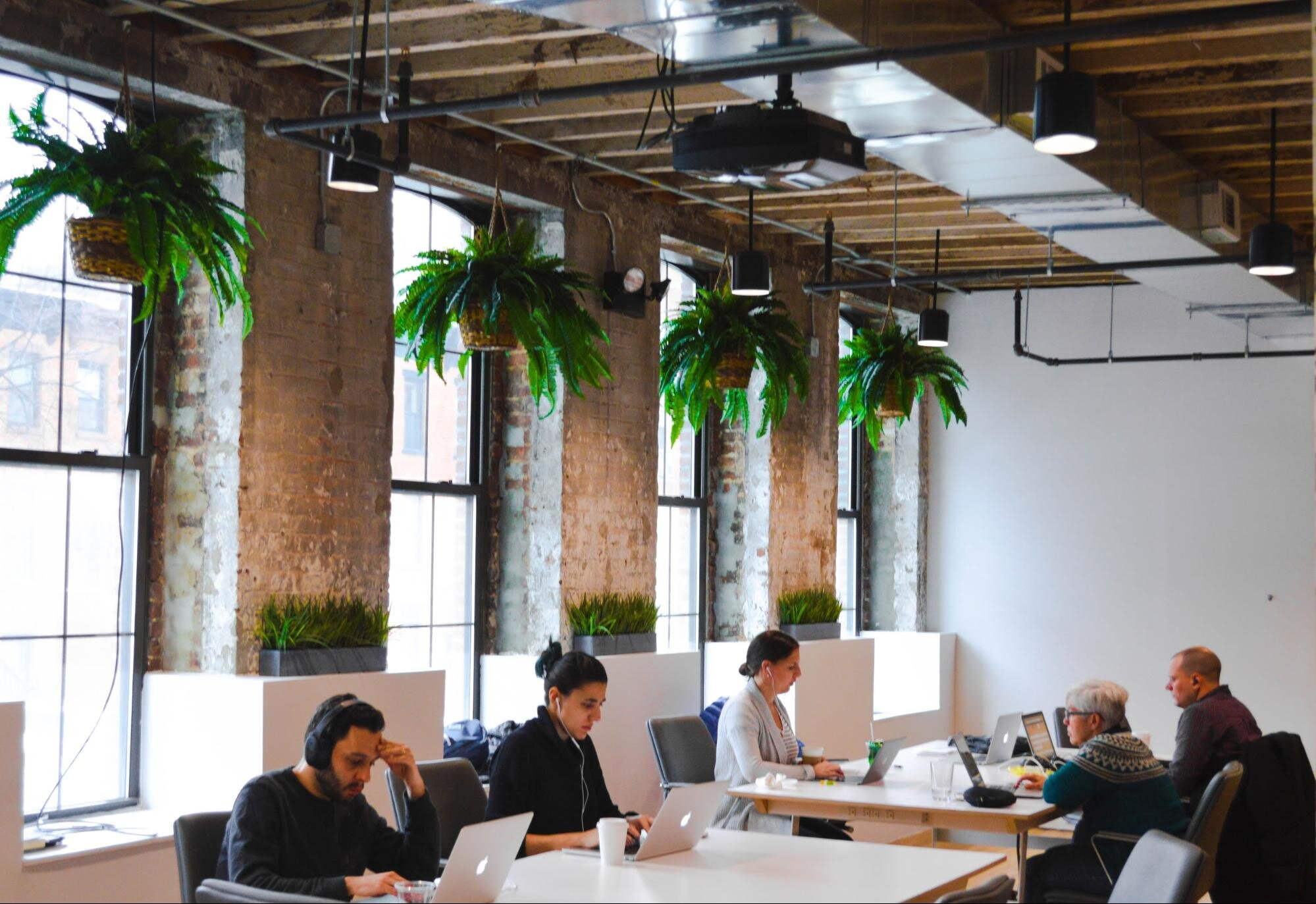 office space filled with the best office plants